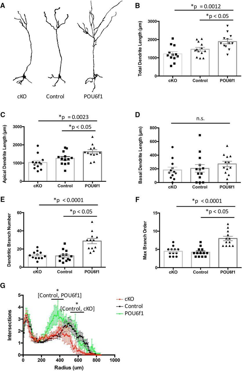 Pou6f1 Mediates Neuropeptide Dependent Plasticity In The Adult Brain 2008 Shaker 1000 Wiring Diagram Download Figure