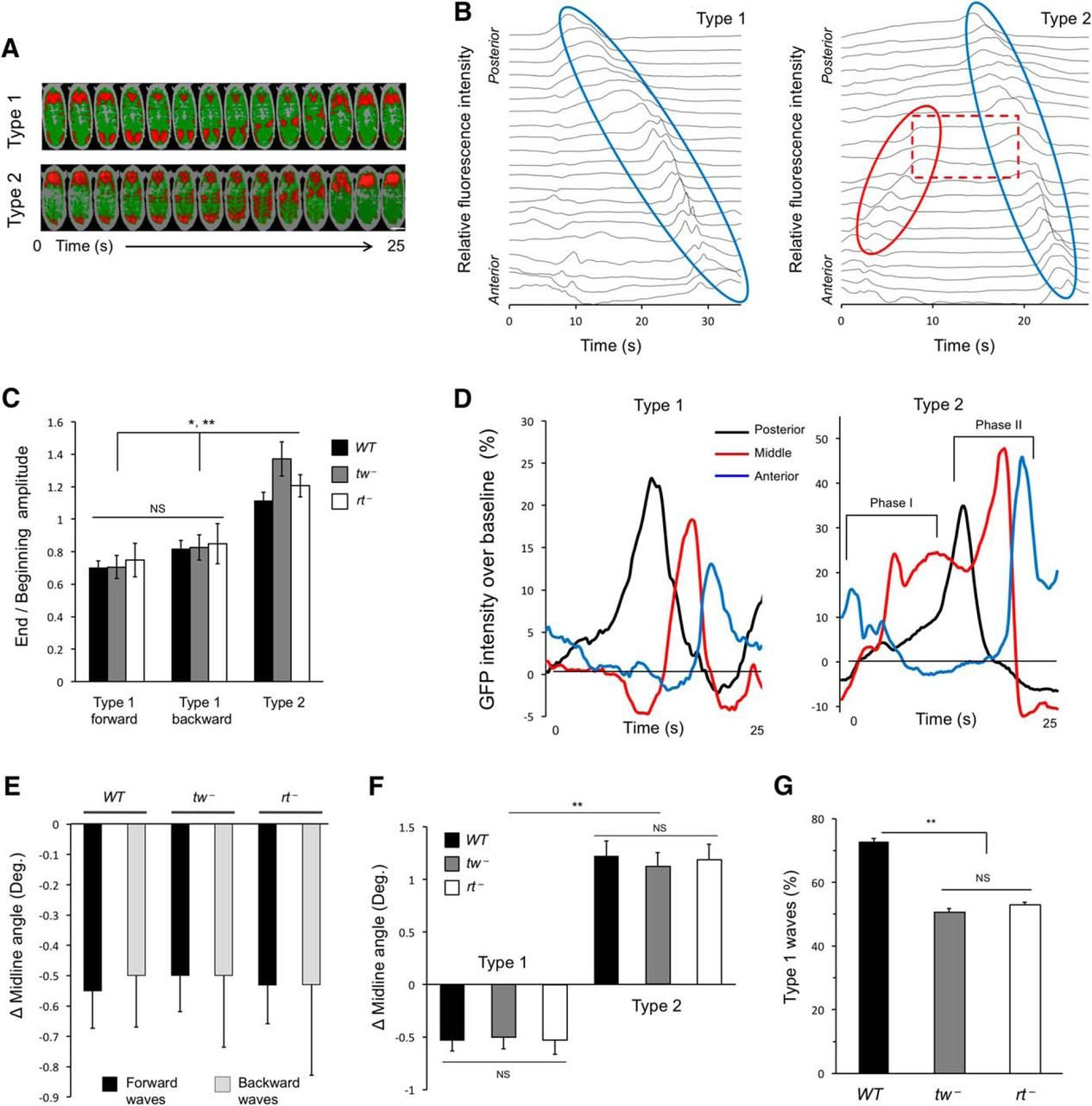 Protein O Mannosyltransferases Affect Sensory Axon Wiring And Color Lights Organ Circuit Using Cmos Ics Download Figure Open In New Tab