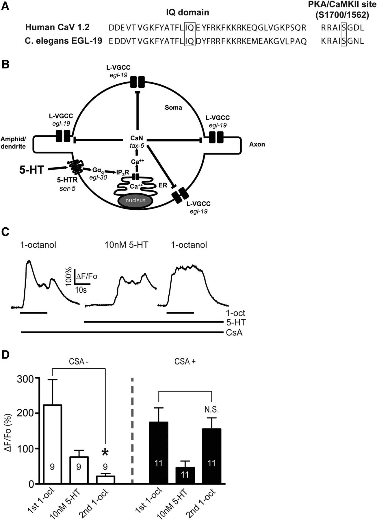 Serotonin Disinhibits a Caenorhabditis elegans Sensory Neuron by