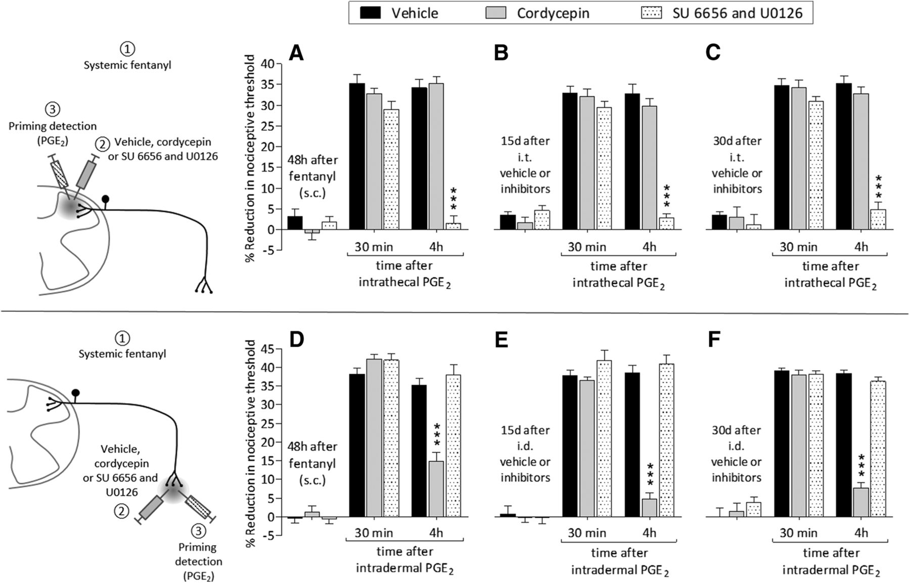 Fentanyl Induces Rapid Onset Hyperalgesic Priming: Type I at