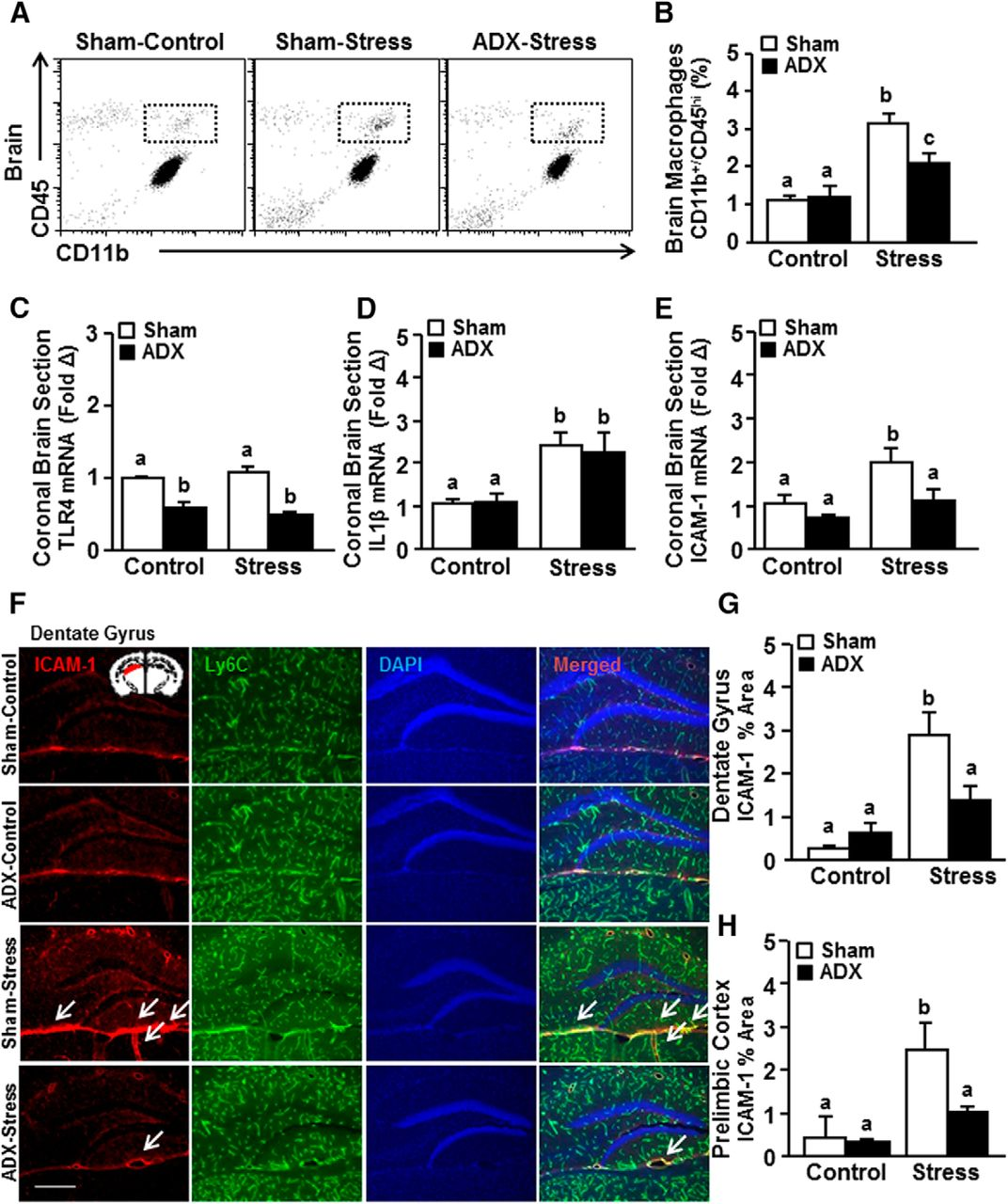 Corticosterone Production during Repeated Social Defeat Causes