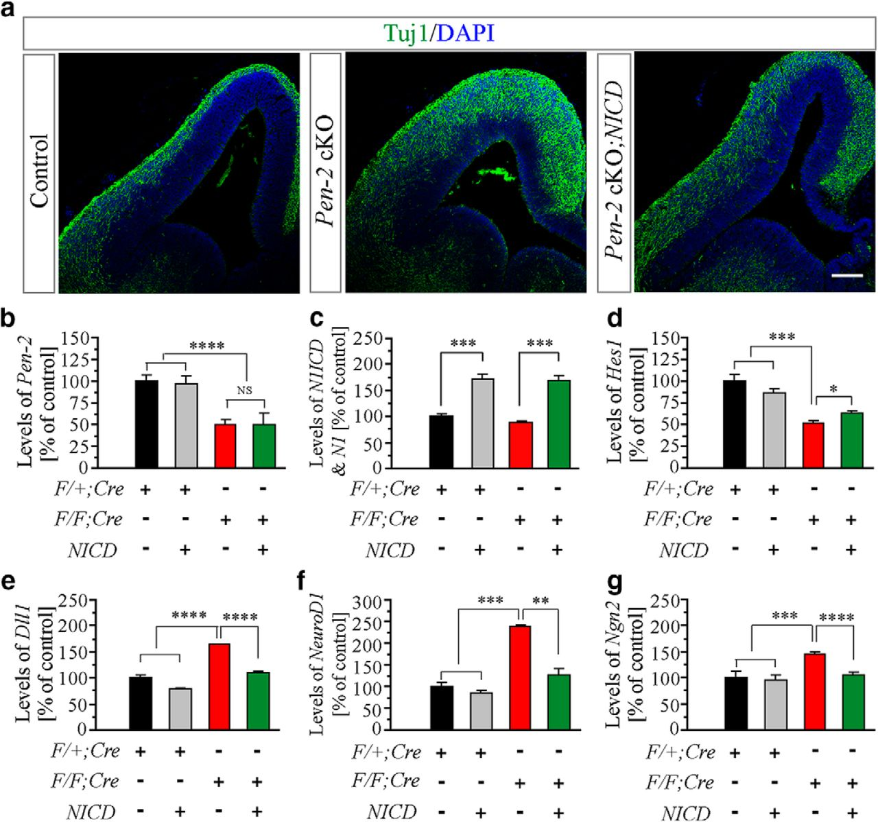 Conditional Inactivation of Pen-2 in the Developing