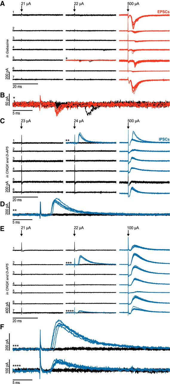Connectivity and Dynamics Underlying Synaptic Control of the