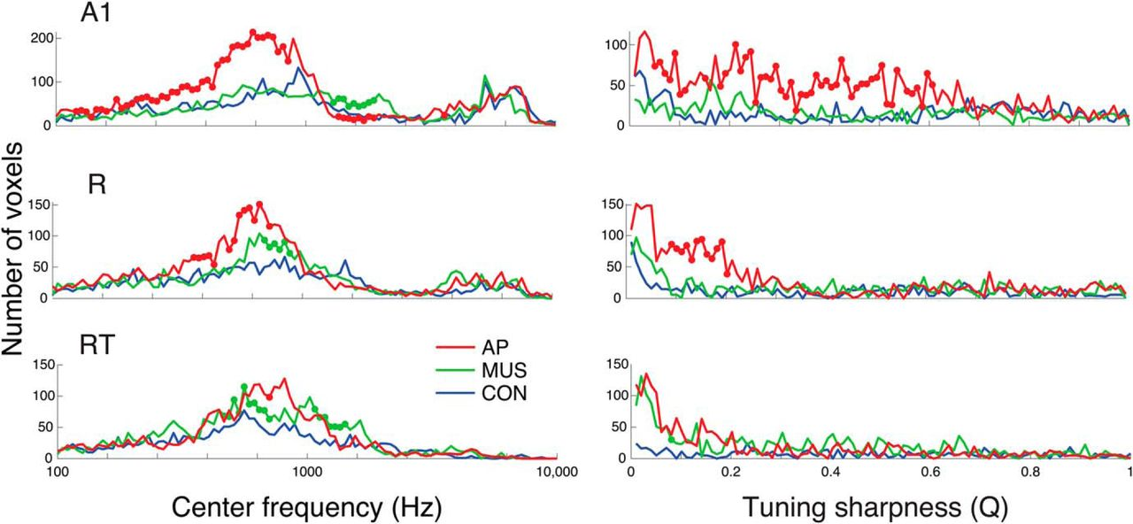 Larger Auditory Cortical Area and Broader Frequency Tuning Underlie