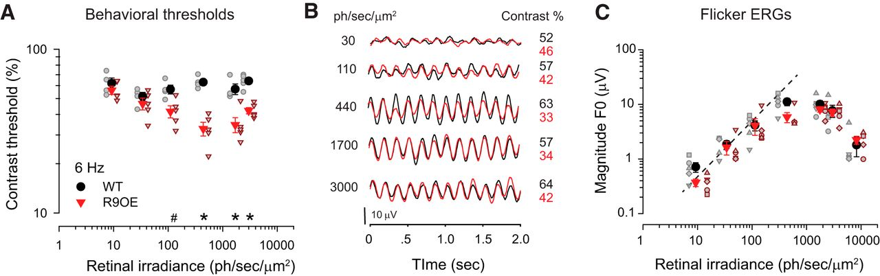 Rod Photoresponse Kinetics Limit Temporal Contrast