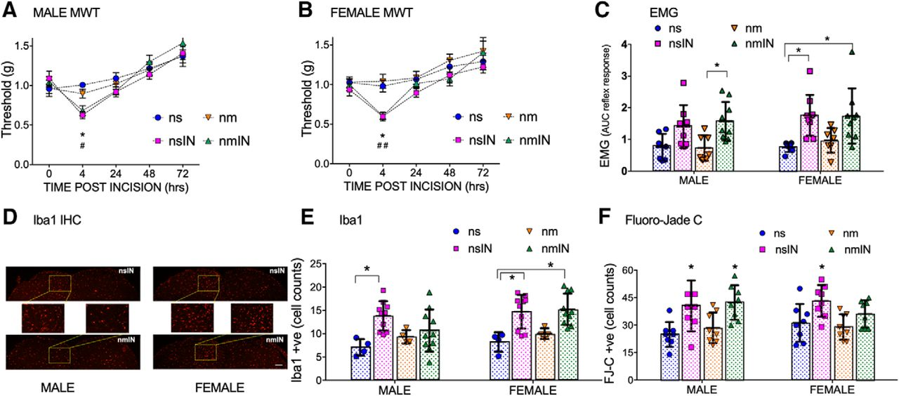 Priming of Adult Incision Response by Early-Life Injury