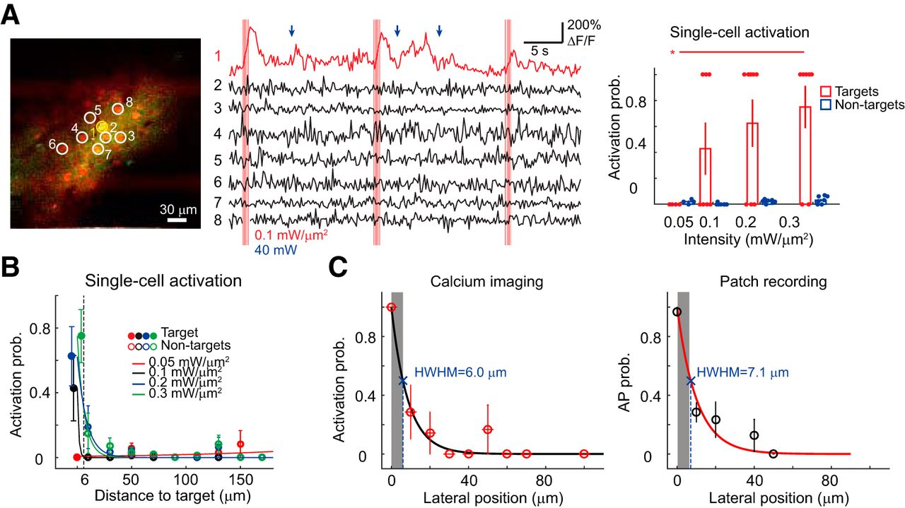 In Vivo Submillisecond Two-Photon Optogenetics with