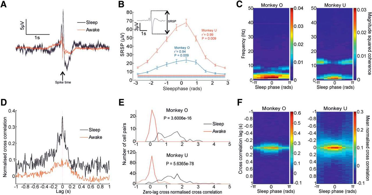 Sequential Neural Activity in Primary Motor Cortex during