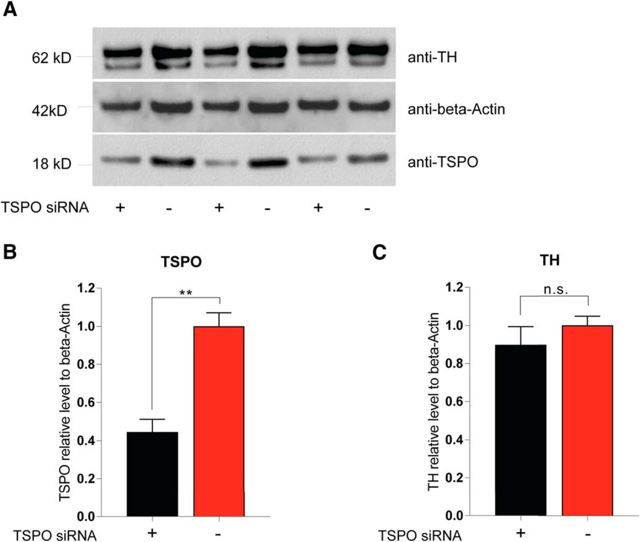 Translocator Protein Ligand Protects against