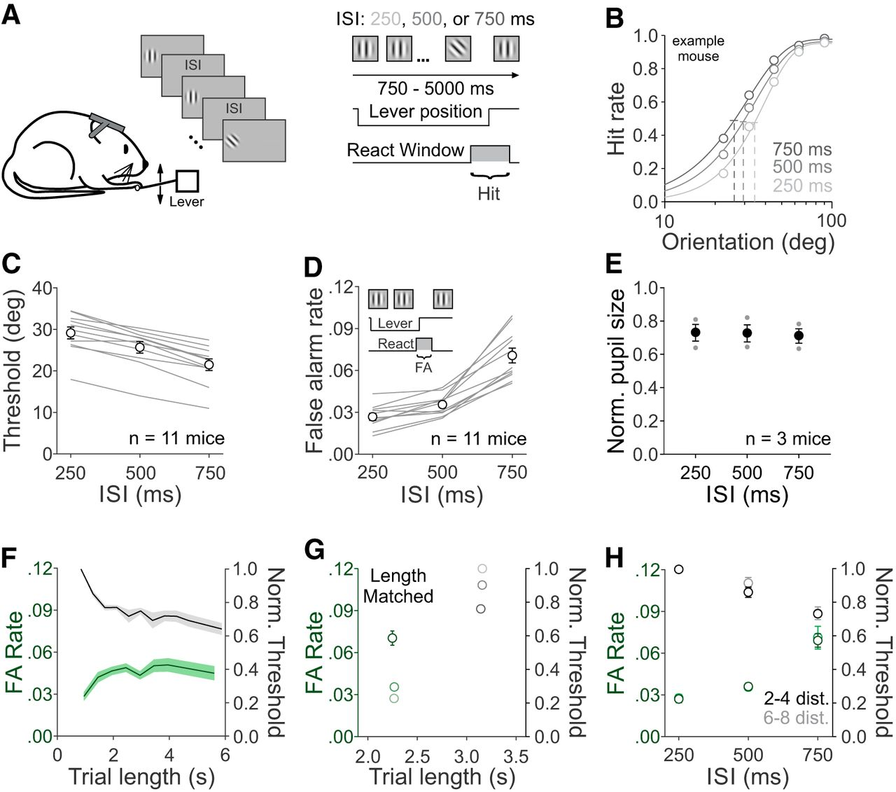 Neuronal Adaptation Reveals a Suboptimal Decoding of Orientation