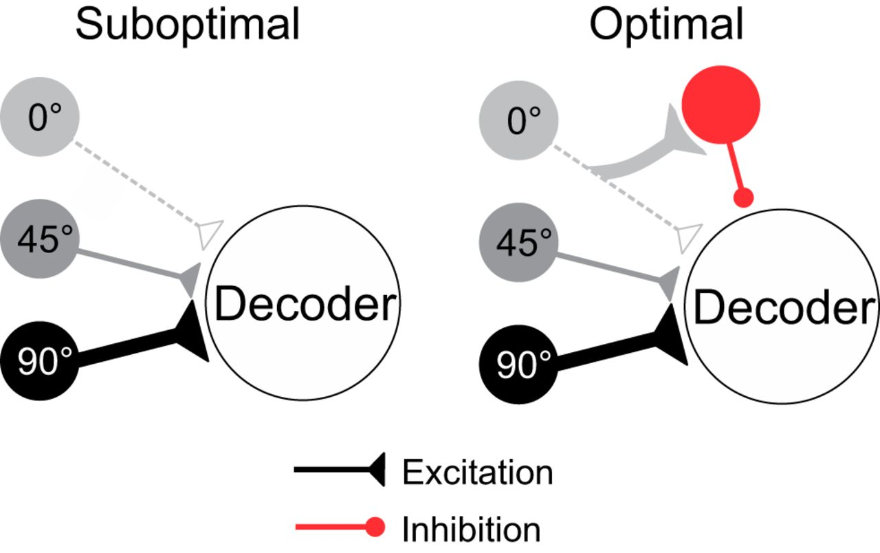 Neuronal Adaptation Reveals a Suboptimal Decoding of ... on