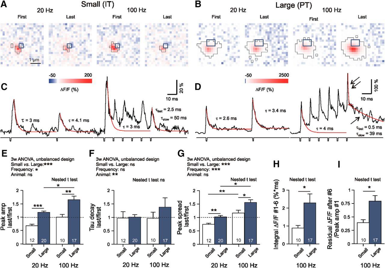 Single Synapse Indicators of Impaired Glutamate Clearance