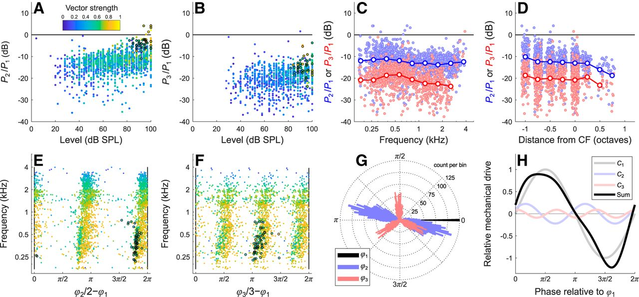 Phase Locking of Auditory-Nerve Fibers Reveals Stereotyped