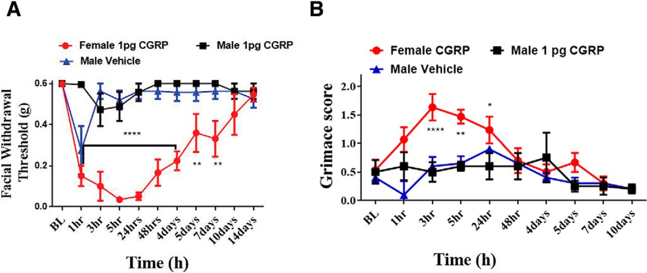 Dural Calcitonin Gene-Related Peptide Produces Female