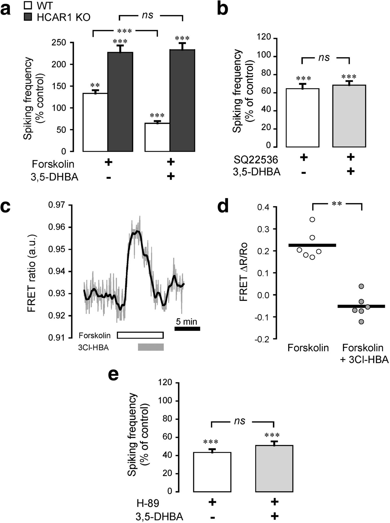 The Lactate Receptor HCAR1 Modulates Neuronal Network Activity