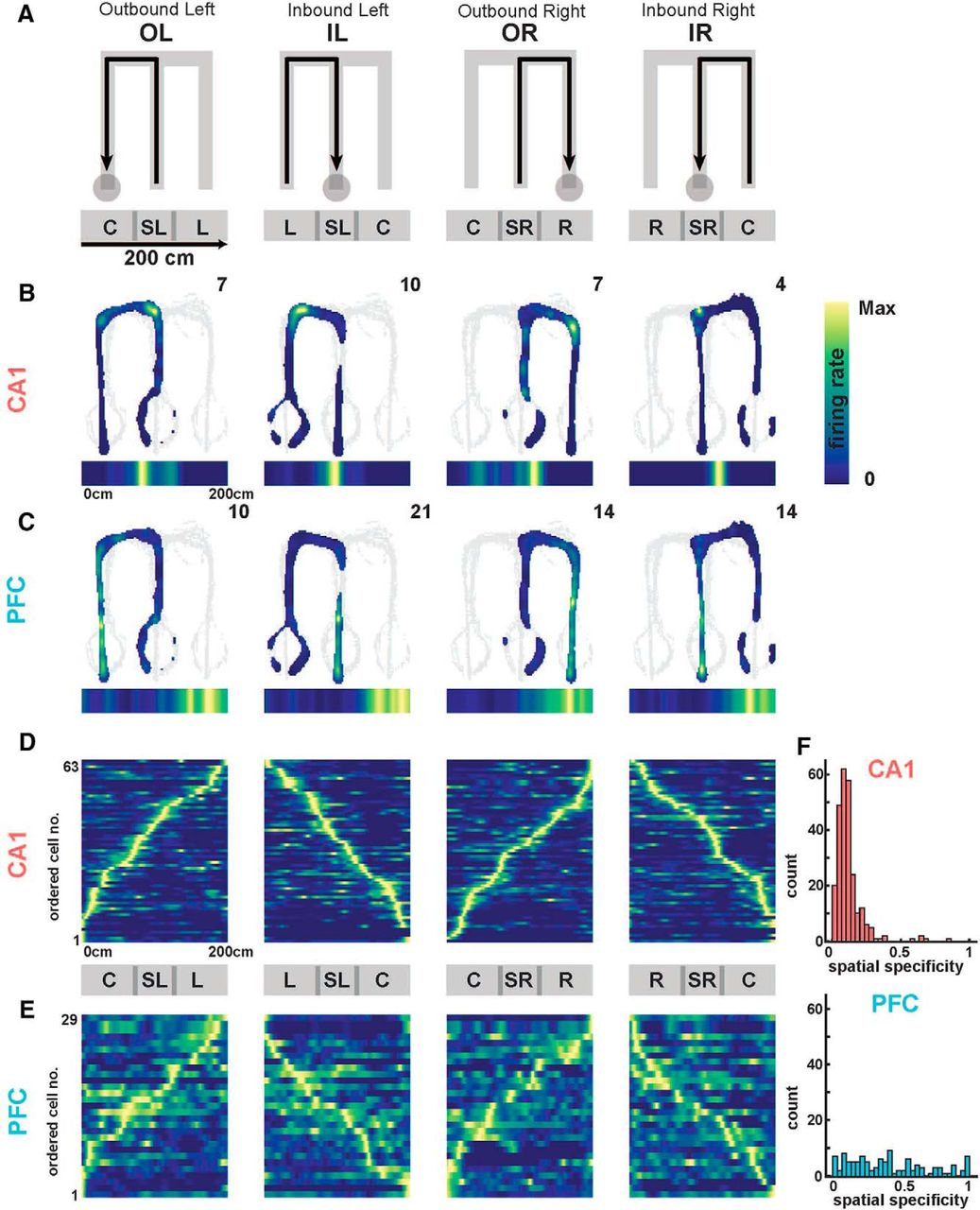 Coherent Coding of Spatial Position Mediated by Theta Oscillations