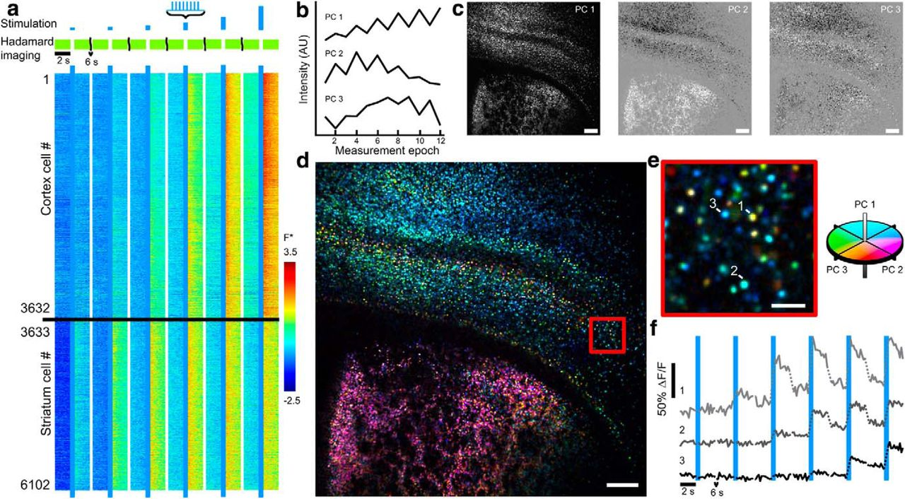 Wide-Area All-Optical Neurophysiology in Acute Brain Slices