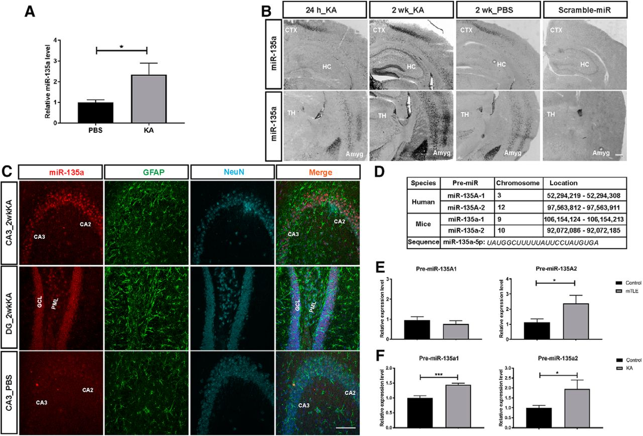 Antagonizing Increased miR-135a Levels at the Chronic Stage of