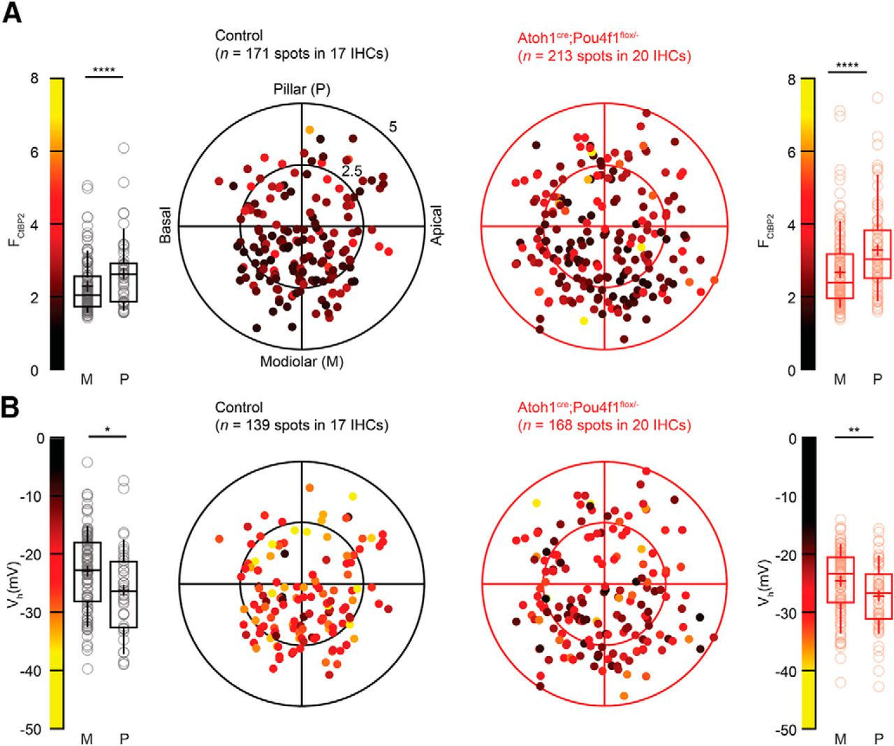 Pou4f1 Defines a Subgroup of Type I Spiral Ganglion Neurons