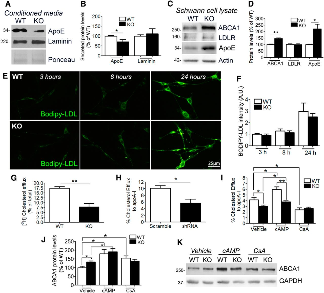 PMP22 Regulates Cholesterol Trafficking and ABCA1-Mediated ... on