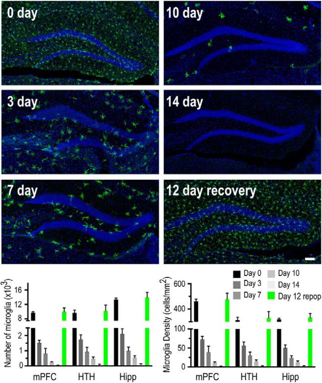 The Behavioral Sequelae of Social Defeat Require Microglia and Are