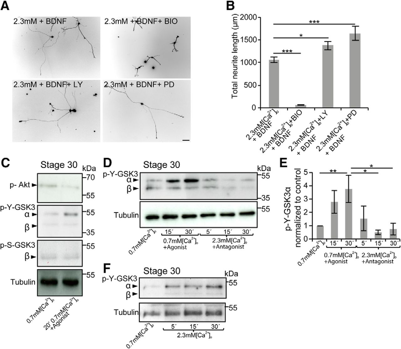 Sensory Axon Growth Requires Spatiotemporal Integration of