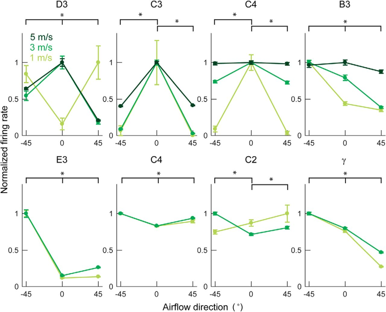 Whisker Vibrations and the Activity of Trigeminal Primary Afferents