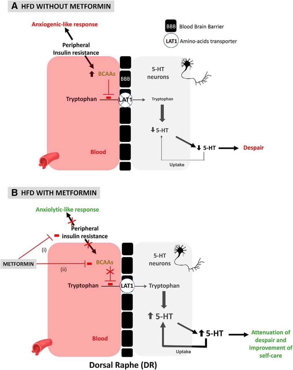 Metformin Promotes Anxiolytic and Antidepressant-Like