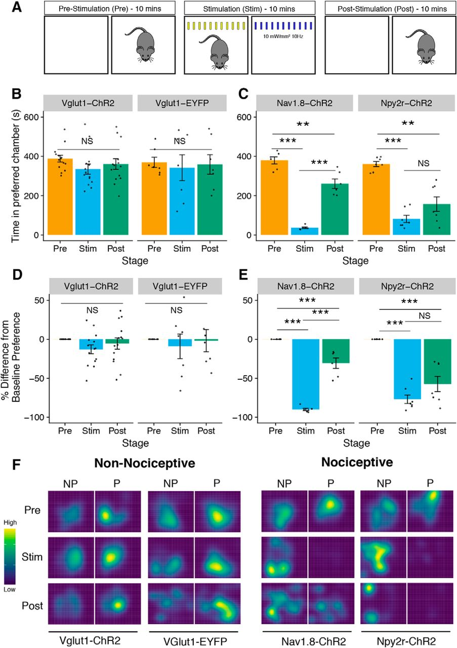 Is Optogenetic Activation of Vglut1-Positive Aβ Low