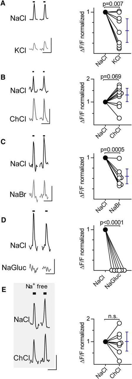 The Role of the Anion in Salt (NaCl) Detection by Mouse