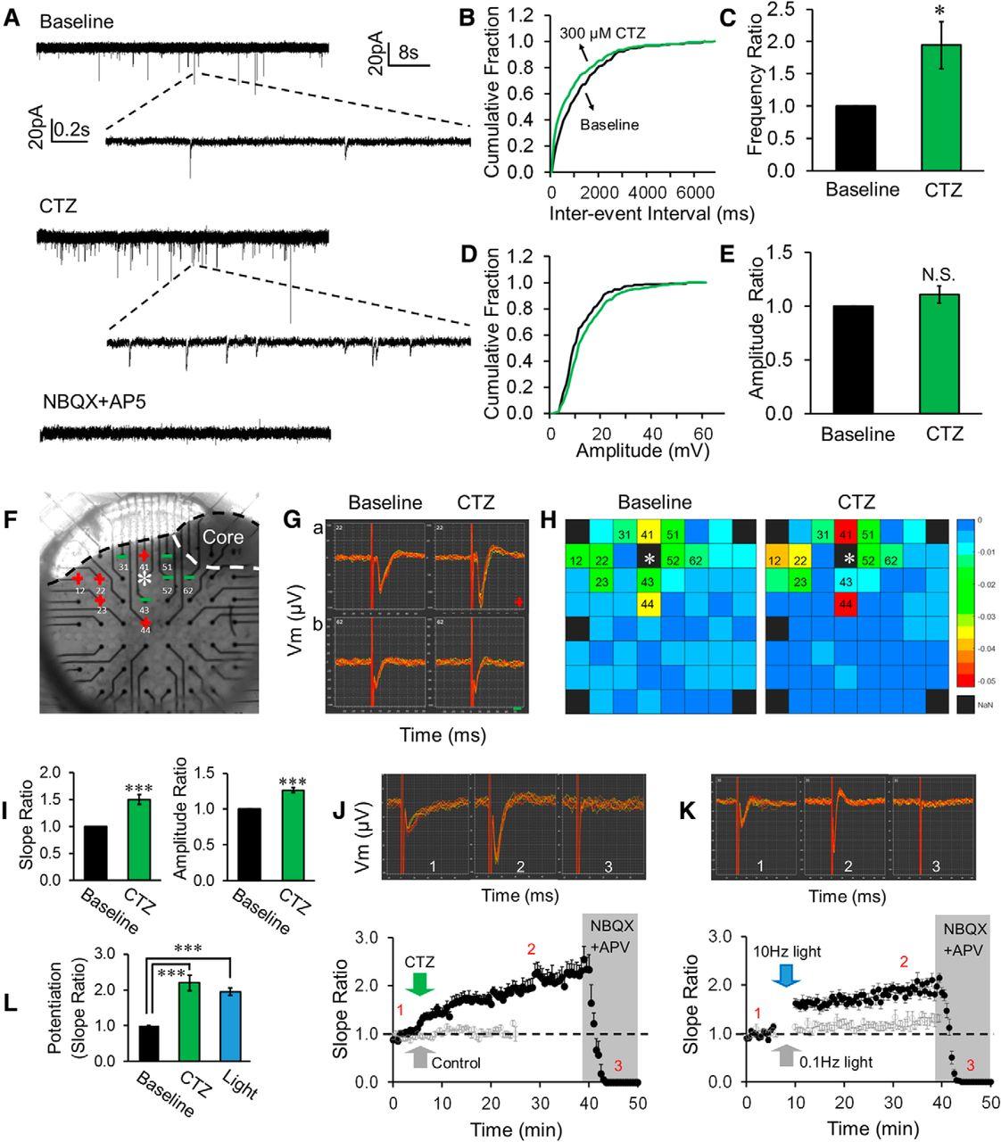 Optochemogenetic Stimulation of Transplanted iPS-NPCs ... on