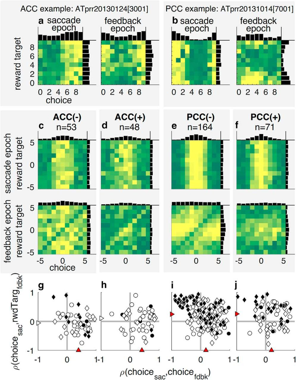 Individual Neurons in the Cingulate Cortex Encode Action