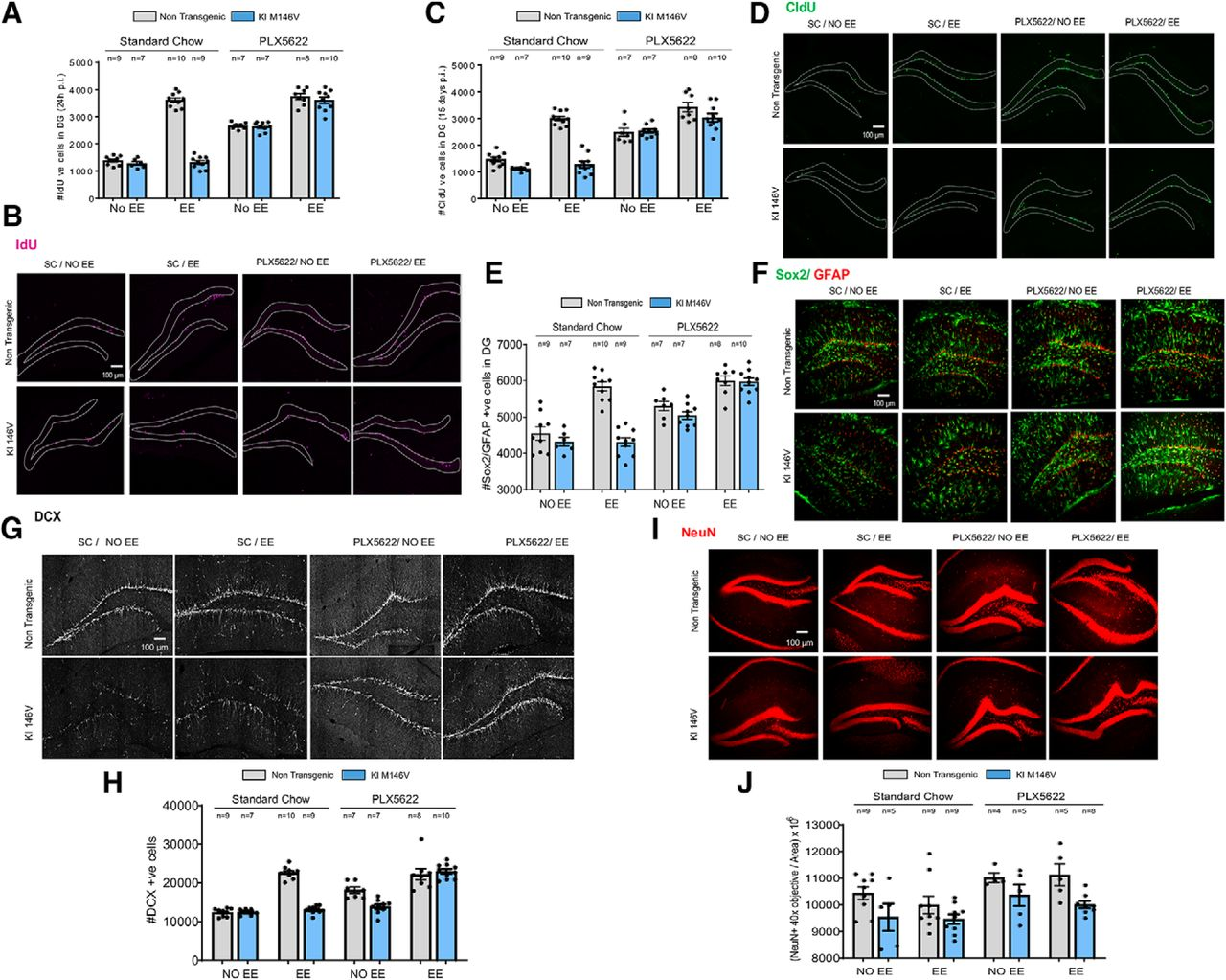 Deficits in Enrichment-Dependent Neurogenesis and Enhanced