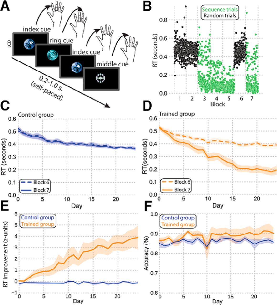 Binding During Sequence Learning Does Not Alter Cortical