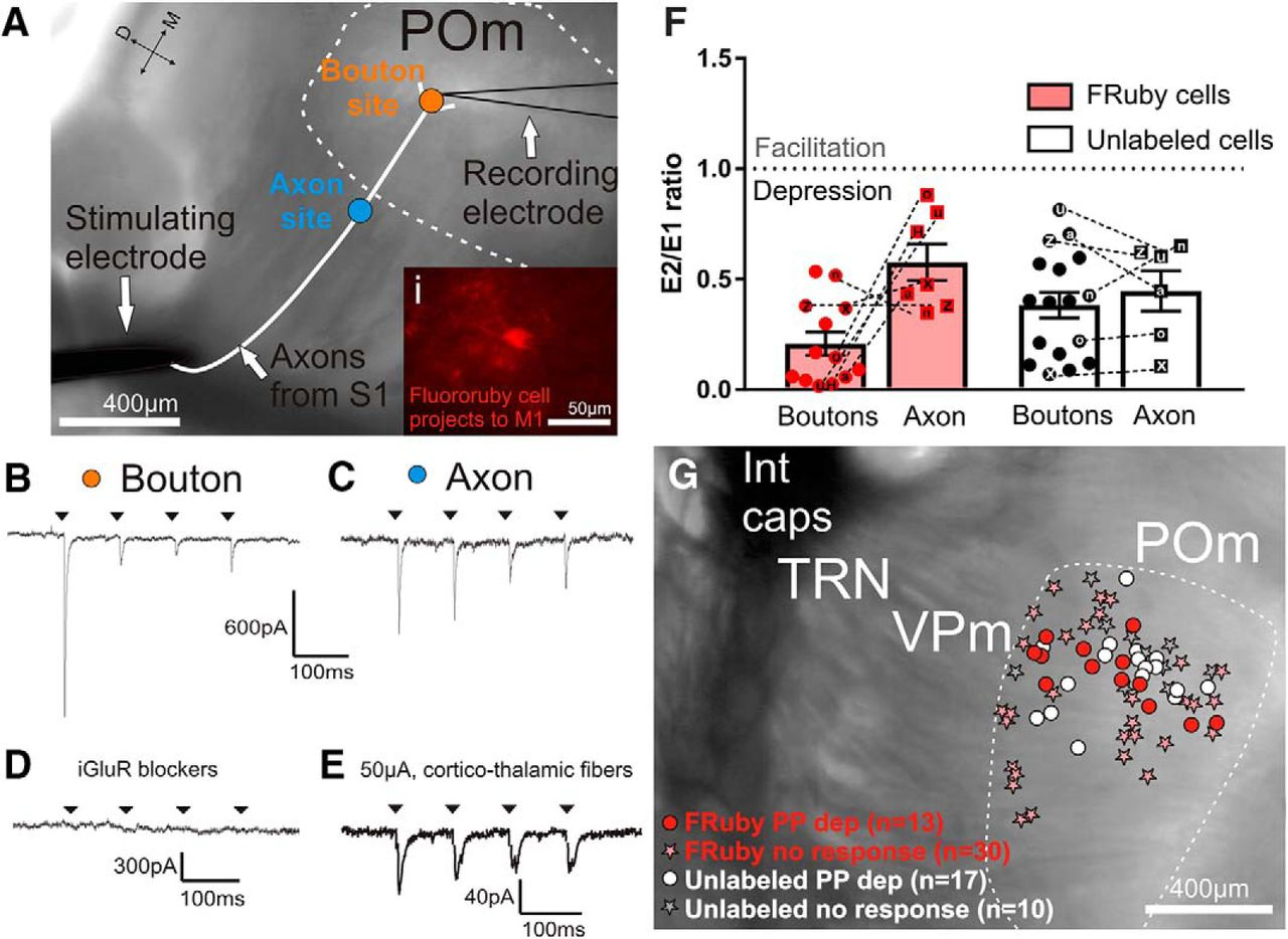 A Sensorimotor Pathway via Higher-Order Thalamus | Journal of