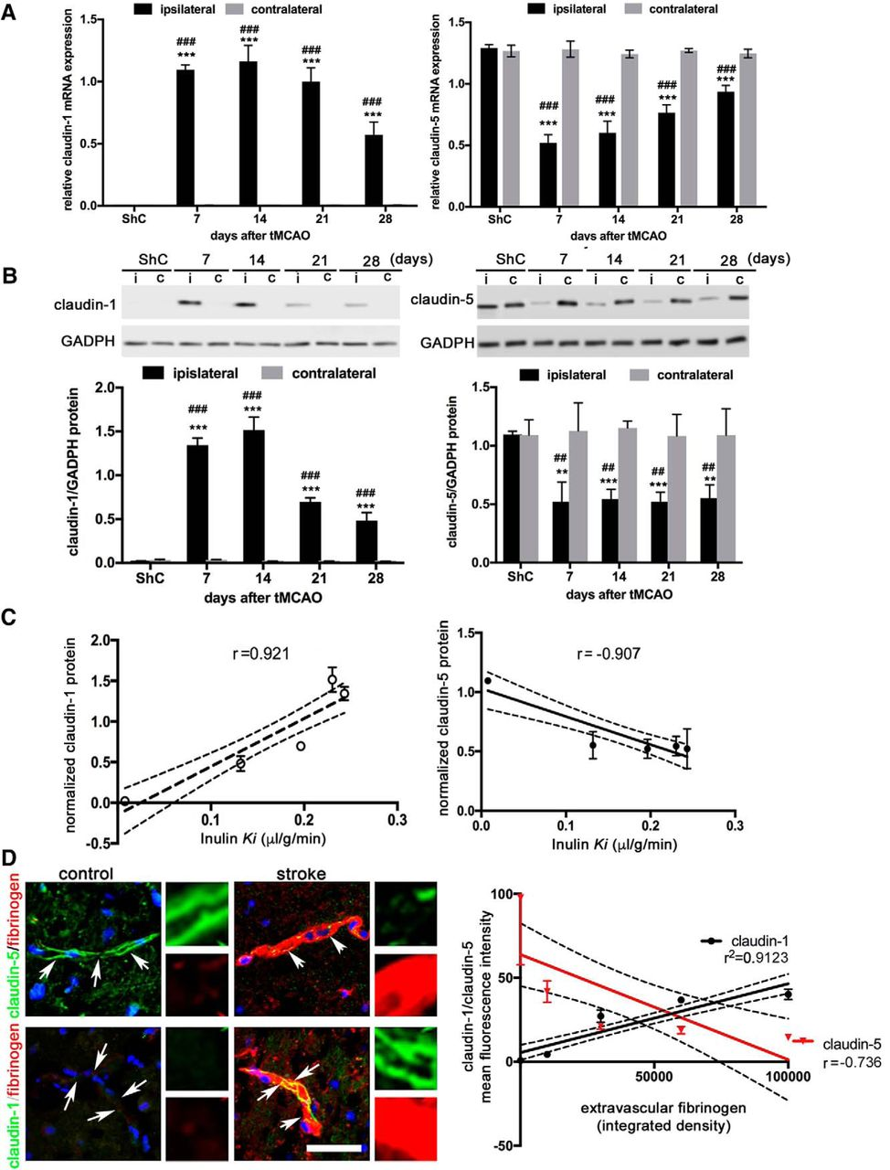 Claudin-1-Dependent Destabilization of the Blood–Brain Barrier in