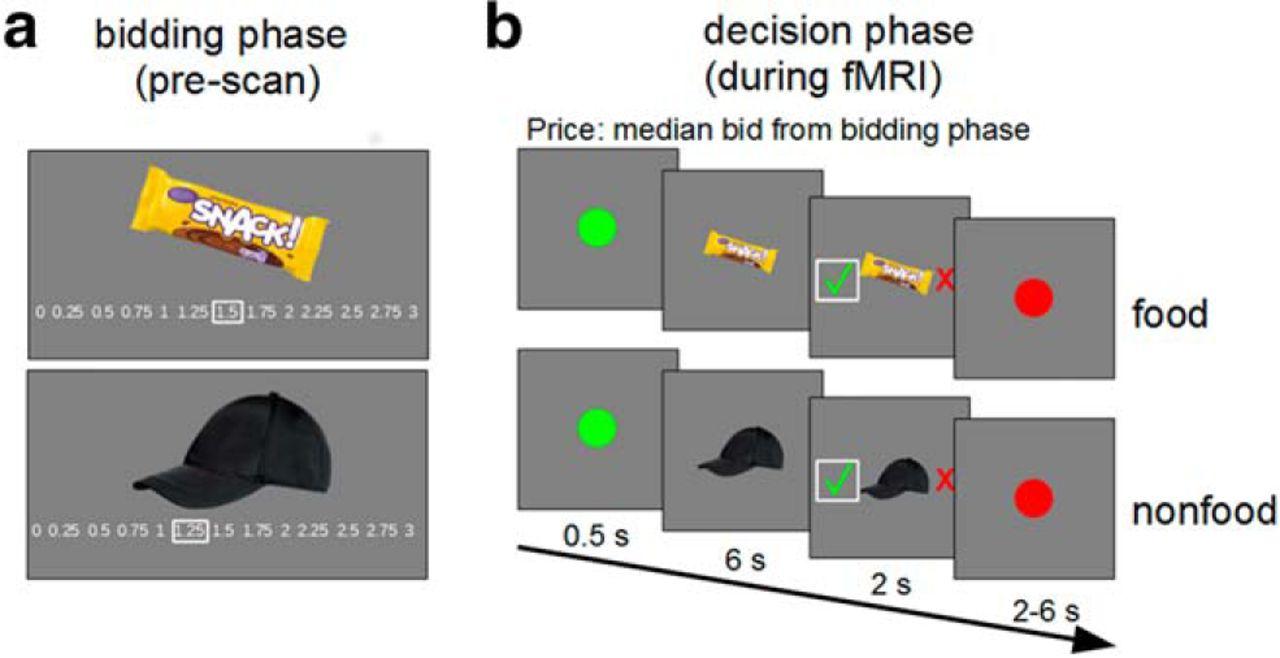 Sleep Deprivation Selectively Upregulates An Amygdala Hypothalamic