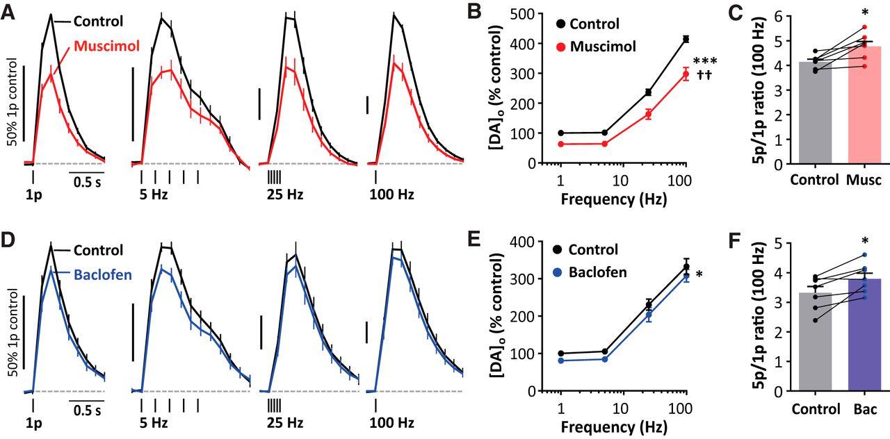 Inhibition of Nigrostriatal Dopamine Release by Striatal