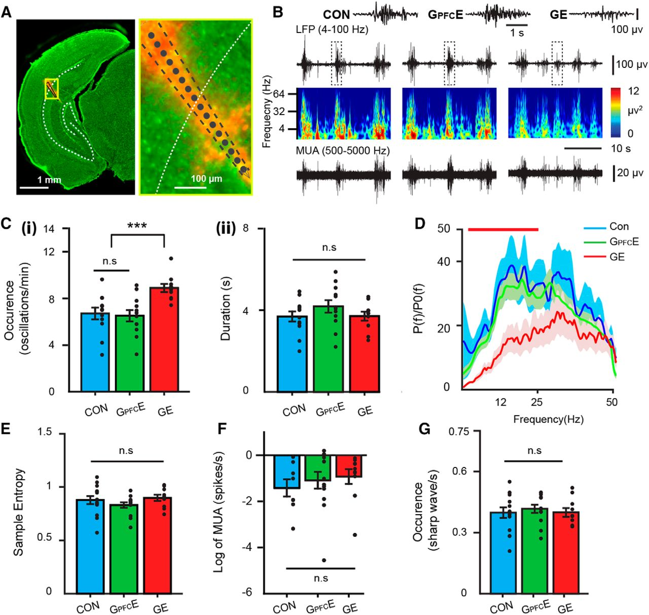 Transient Knock-Down of Prefrontal DISC1 in Immune