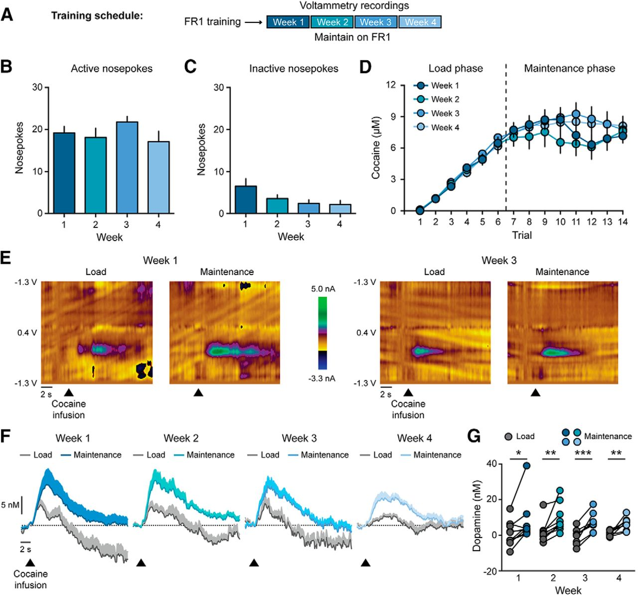 Operant Costs Modulate Dopamine Release to Self-Administered