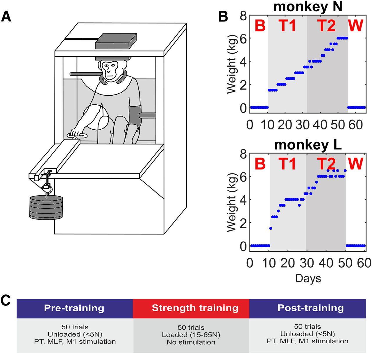 Testing chamber for monkey; https://doi.org/10.1523/JNEUROSCI.1923-19.2020