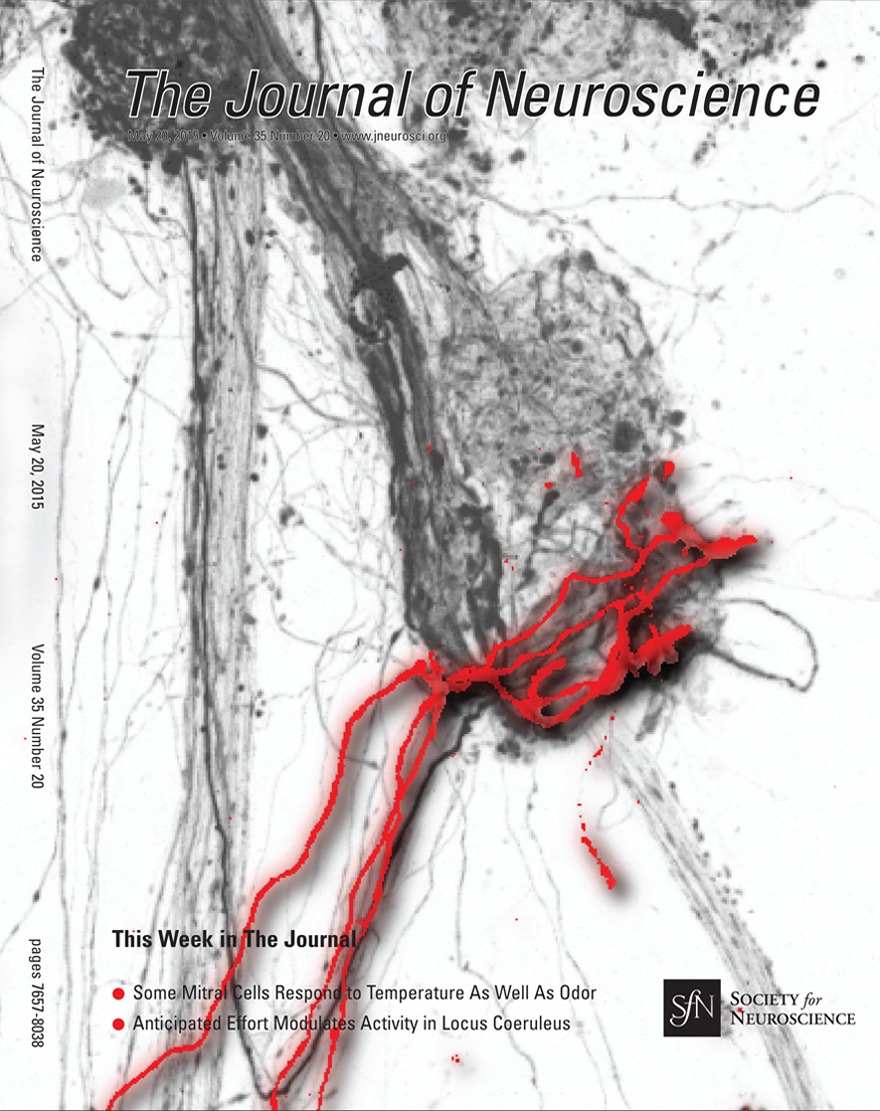Noradrenaline and Dopamine Neurons in the Reward/Effort Trade-Off: A ...