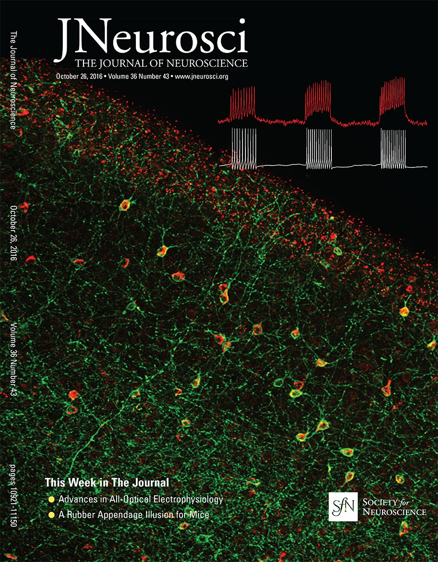 A Decline In Response Variability Improves Neural Signal Detection