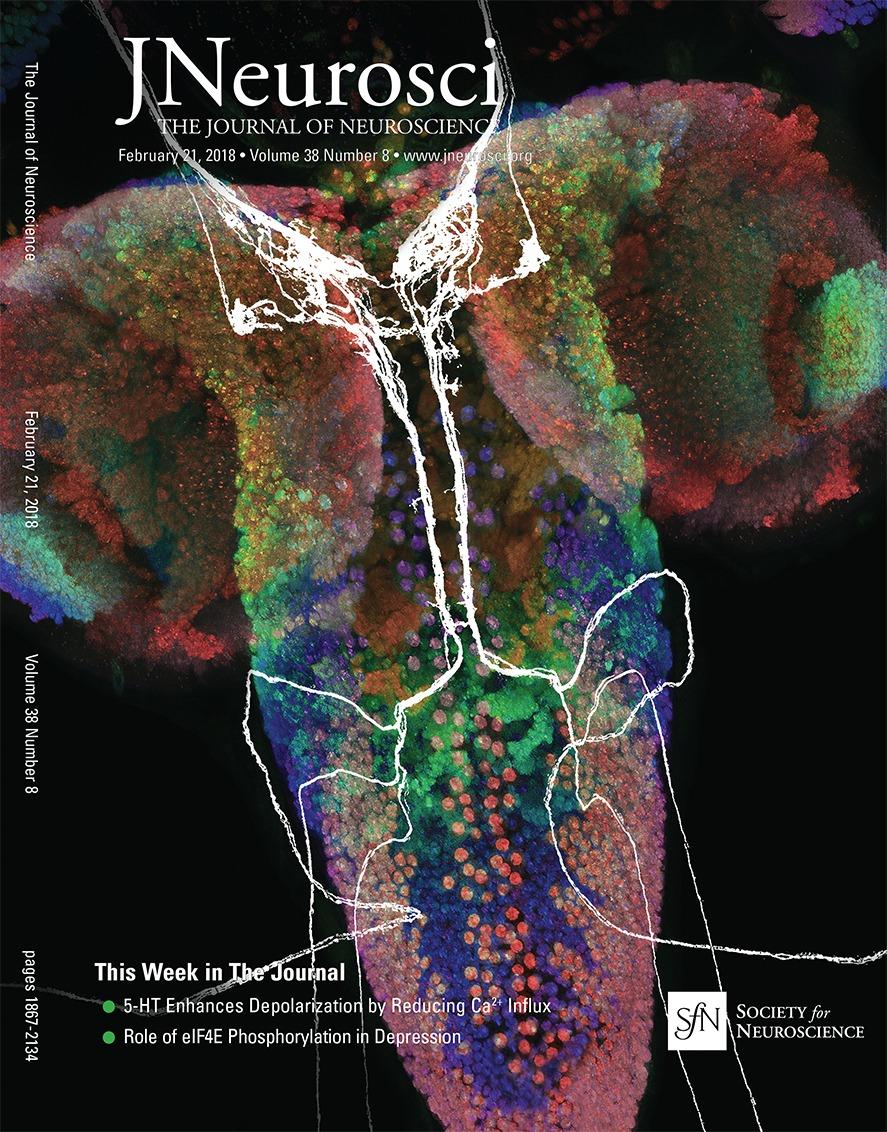 Loss Of Eif4e Phosphorylation Engenders Depression Like Behaviors Molecular Expressions Electricity And Magnetism Resistance Via Selective Mrna Translation Journal Neuroscience