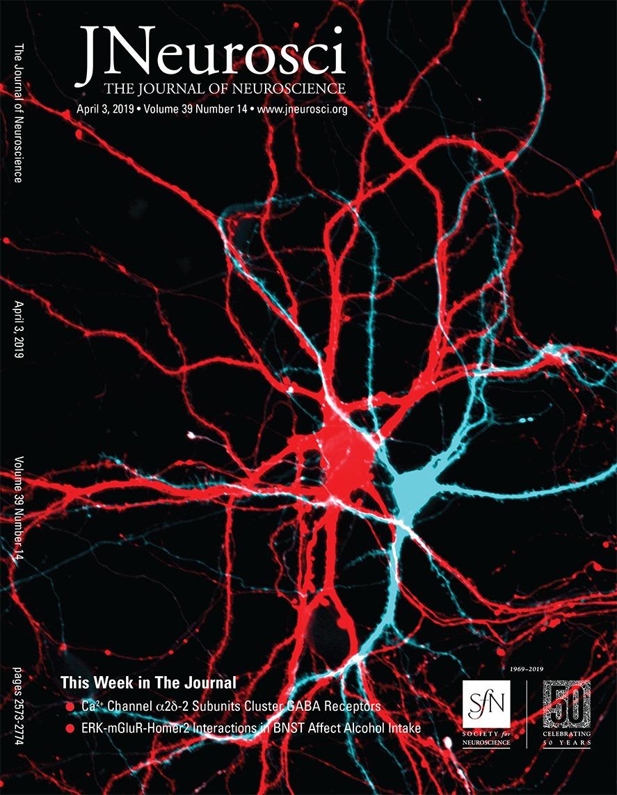 Distinctive Brain Pattern May Underlie >> Regional Delta Waves In Human Rapid Eye Movement Sleep Journal Of