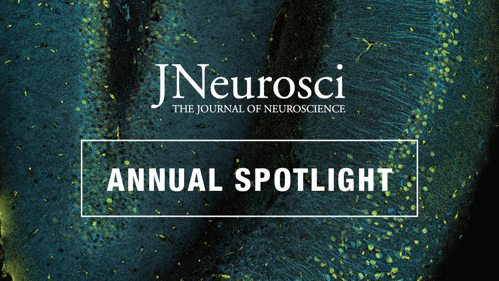 Introducing the Annual Spotlight