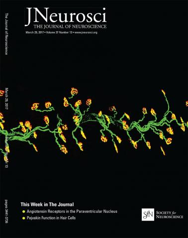 The Journal of Neuroscience: 37 (13)