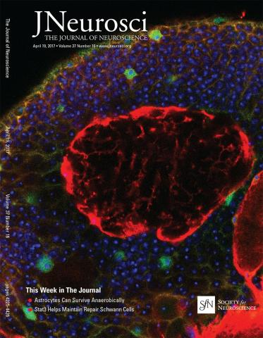 The Journal of Neuroscience: 37 (16)