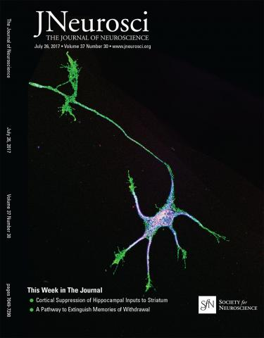 The Journal of Neuroscience: 37 (30)