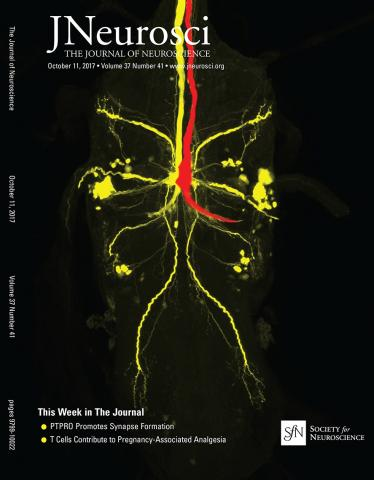 The Journal of Neuroscience: 37 (41)